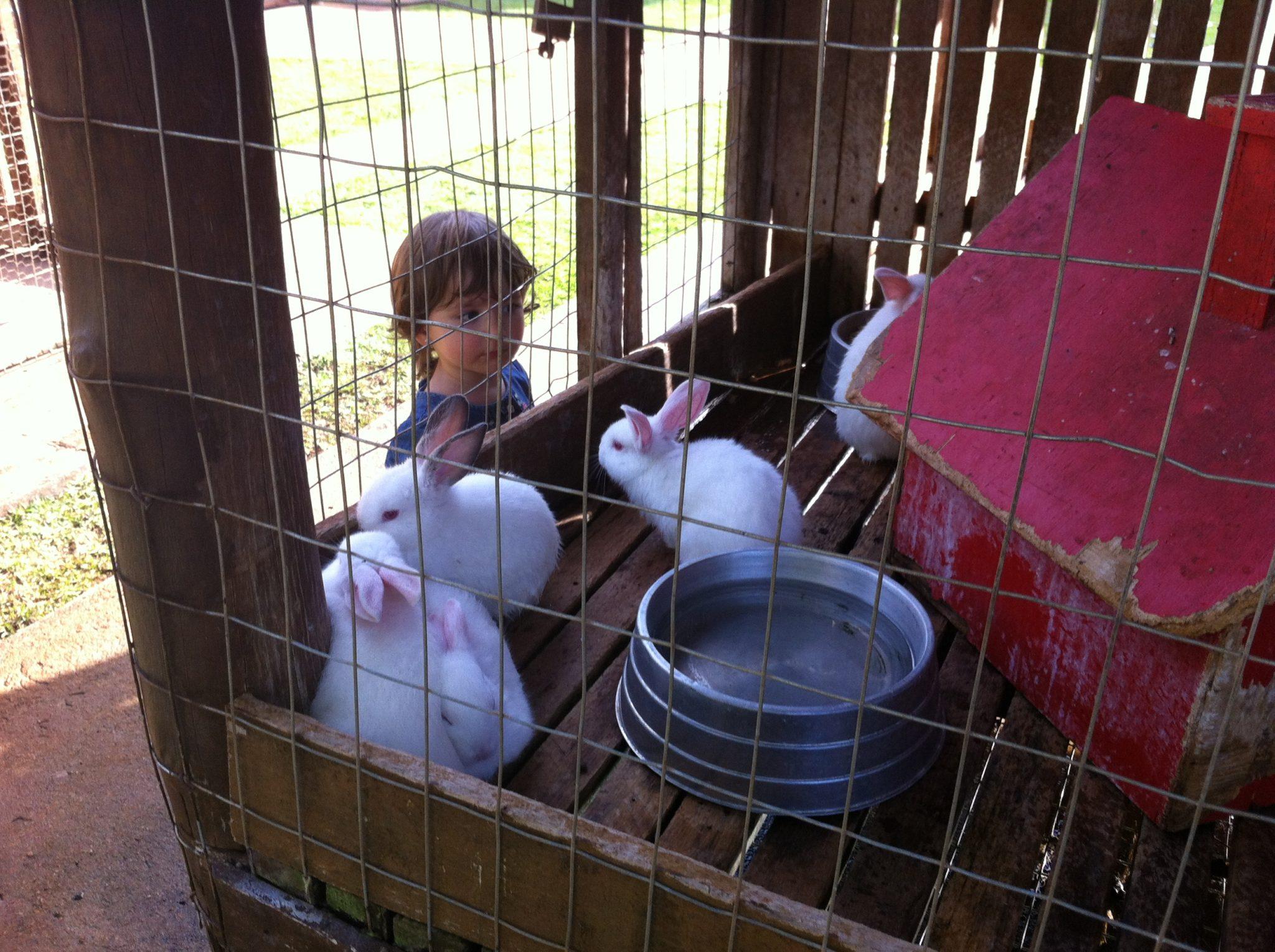 Minha filha Manu adorou os coelhinhos da Fazendinha/Foto: Blog Mamãe Prática