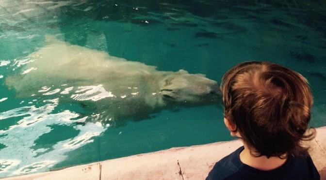 Passeio no aquário: o dia que me arrependi de ter levado meu filho
