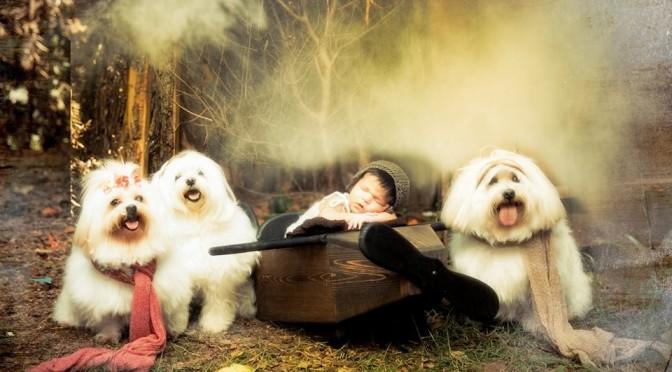 Alergia a gatos e cães: o que fazer se seu filho pedir um pet